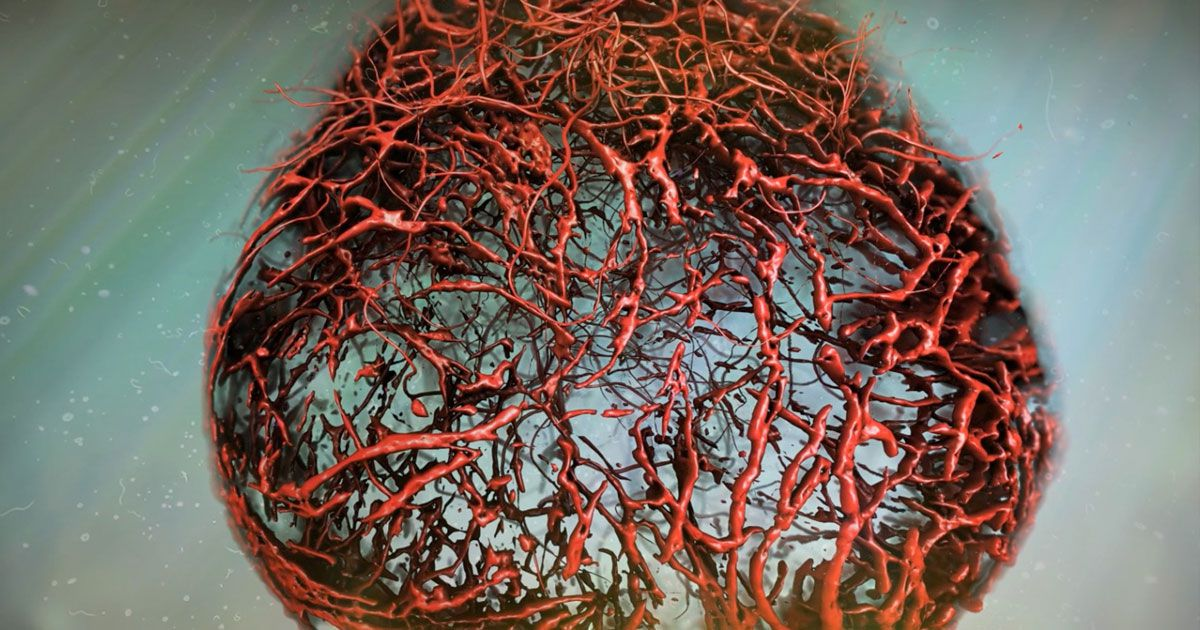 We can now grow perfect human blood vessels in a lab