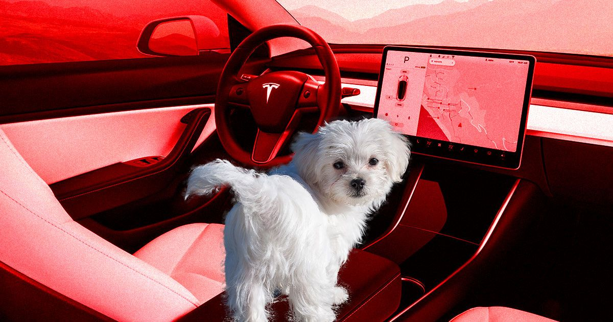 Tesla S New Dog Mode Will Keep Canines Happy With Ac Music
