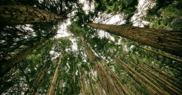Research: Planting trillions of trees could cancel out CO2 emissions