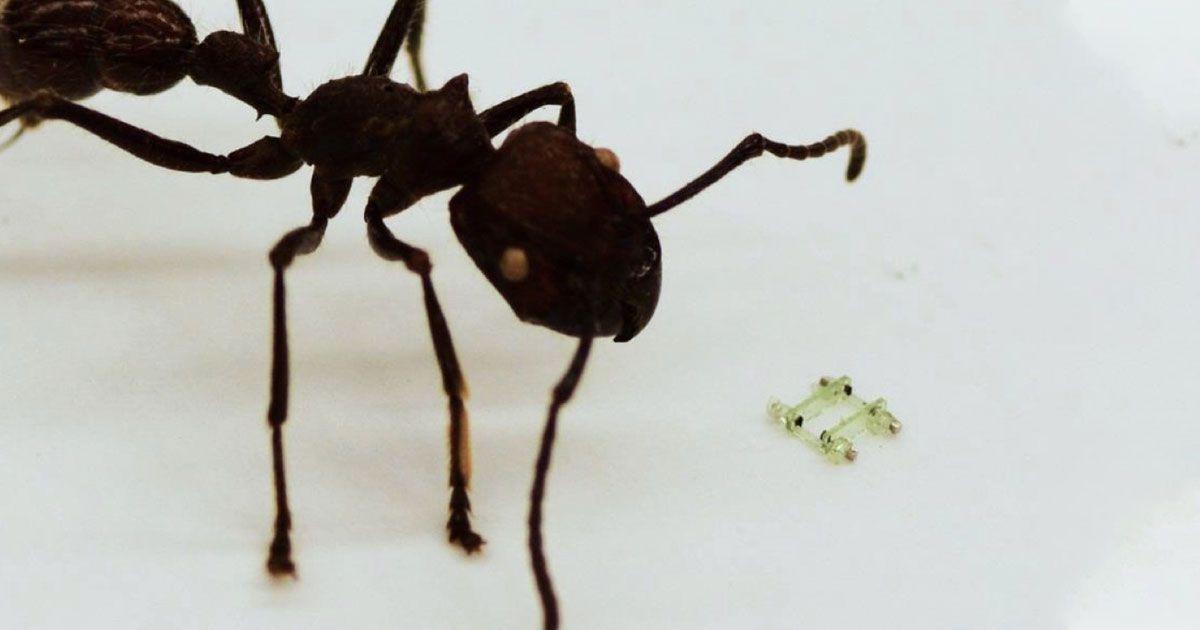 Watch an adorably tiny robot go for a run