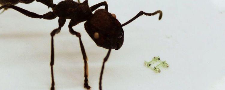 Watch an Adorably Tiny Robot Go for a Teeny Run