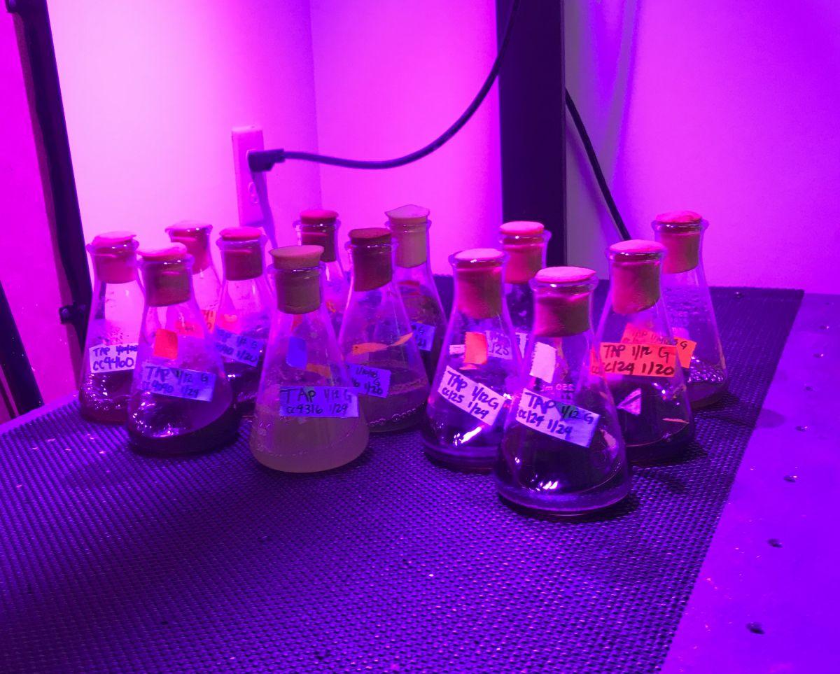 Bio Kato samples