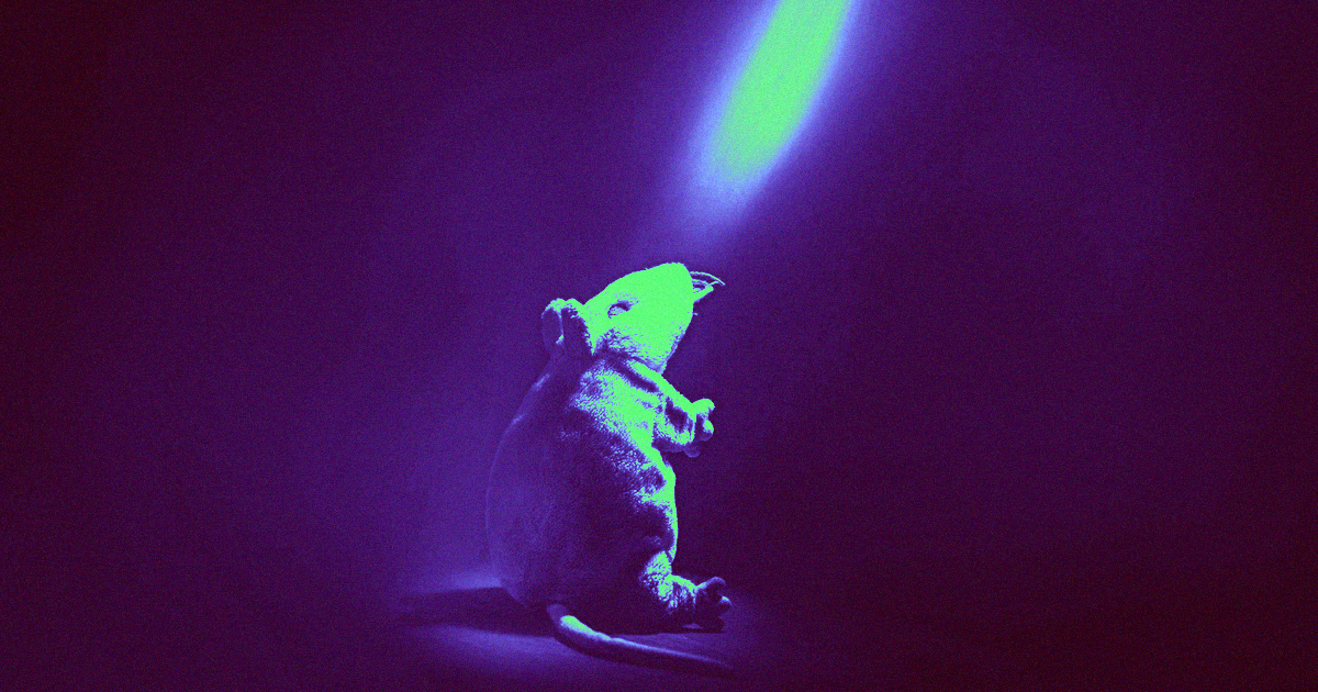 Scientists Reversed Rats' Alcoholism by Firing Lasers at Their Brains