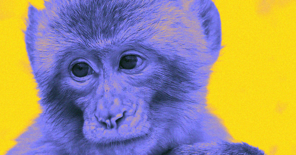 Chinese Scientist Defends Splicing Human Brain Gene Into Monkeys