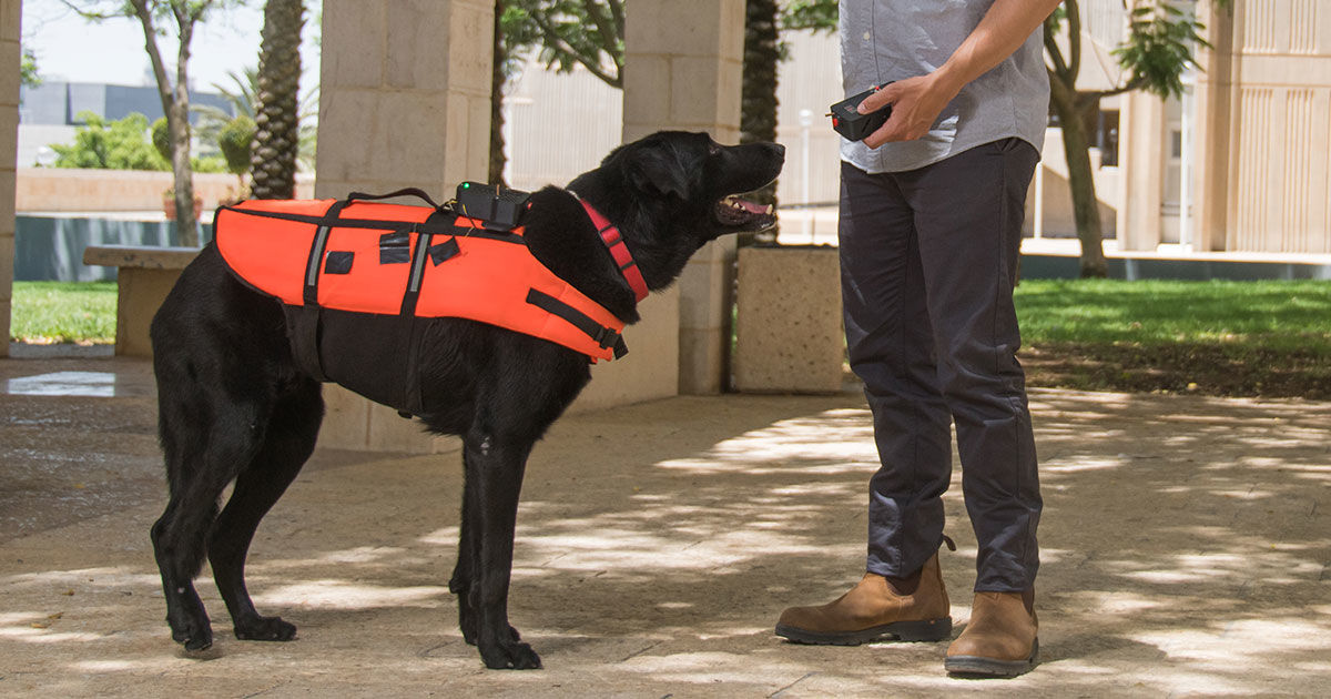 "A Vibrating Haptic Feedback Vest Could ""Steer"" Rescue Dogs"