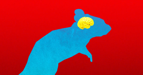 Scientists Create Mice Containing Active Human Brain Cells