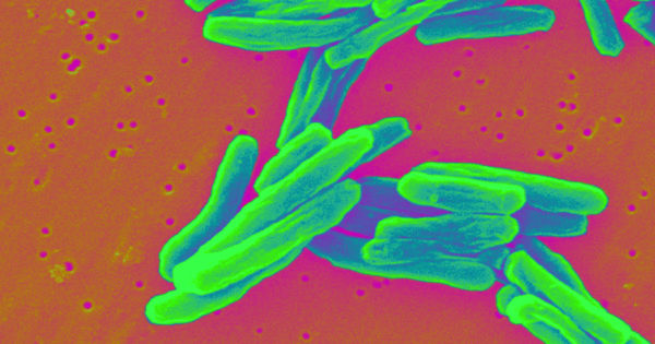 We Have a Cure for the Deadliest Form of Tuberculosis