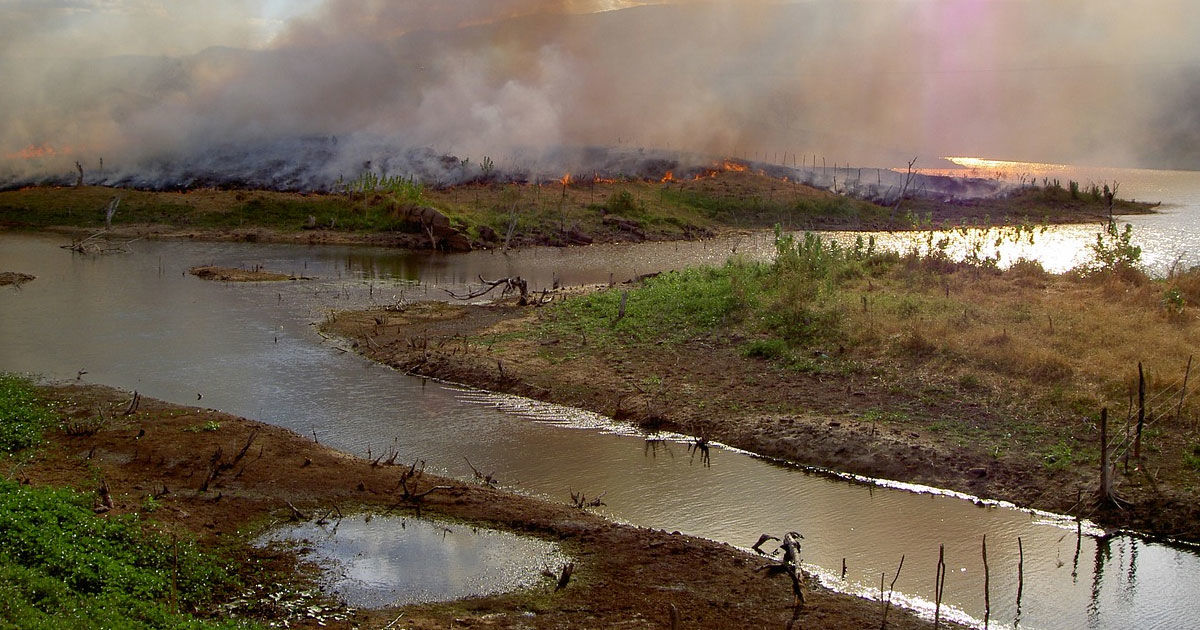 """Scientists Warn Of """"Cascading System Collapse"""" in Amazon Rainforest"""