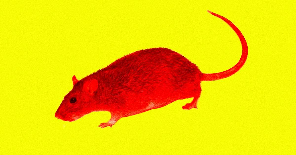 Scientists reverse cognitive deficits of Down syndrome in mice