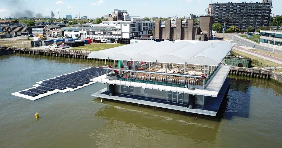35 Cows Live on a Floating Dairy Farm Staffed by Robots