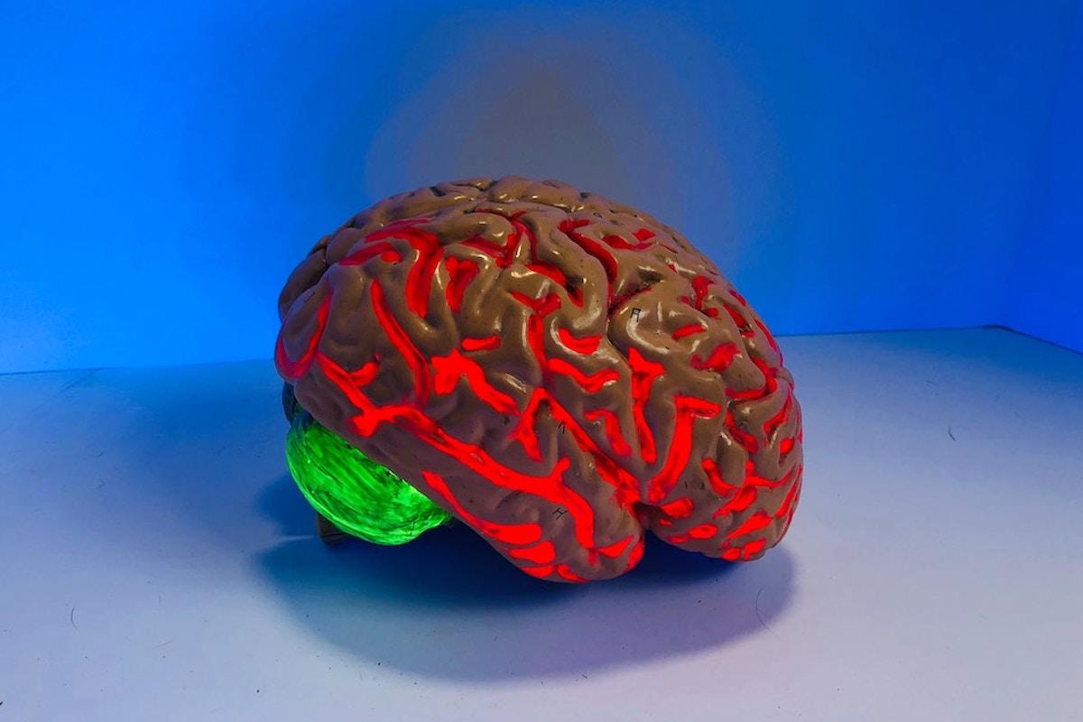 Brain Training Bundles