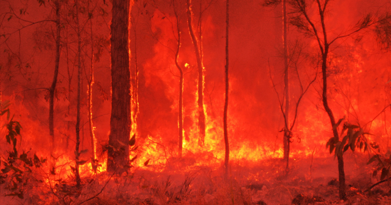 The Huge Australian Fires Could Change the Entire Earth's Climate
