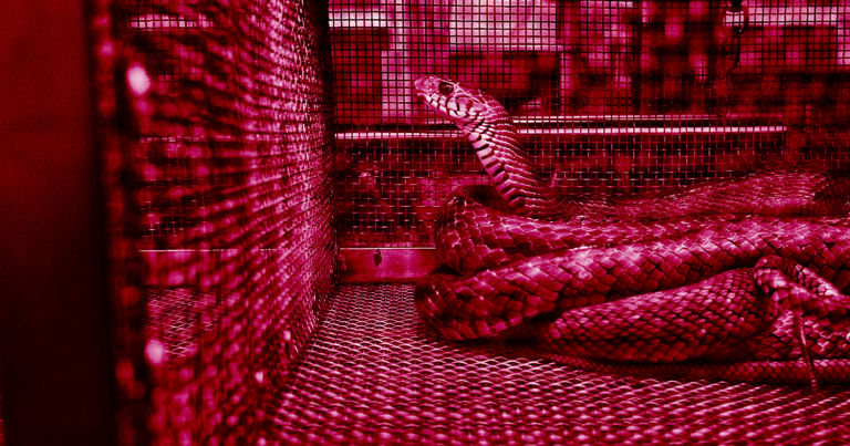 Mysterious Chinese Virus May Have Spread From Snakes