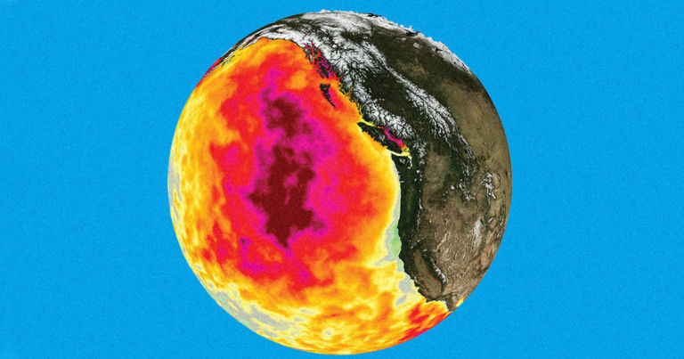 """Pacific Ocean's Warm """"Blob"""" Killed a Million Seabirds in One Year"""