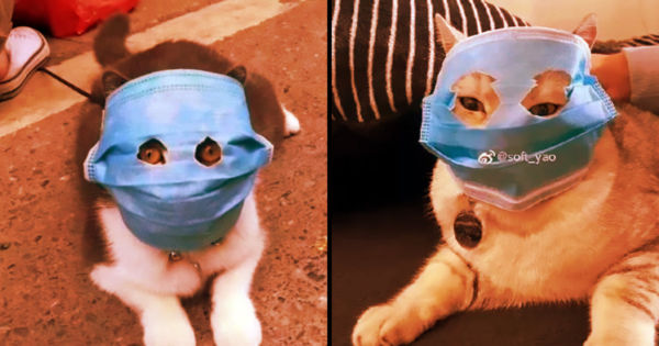 chinese cats are wearing face masks to protect from virus