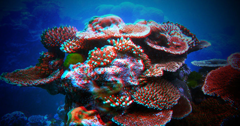 New Research: All Coral Reefs May Be Completely Dead by 2100 thumbnail