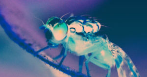 A new study on fruit flies found ways to quantitatively measure the level of consciousness that a fly was currently experiencing.