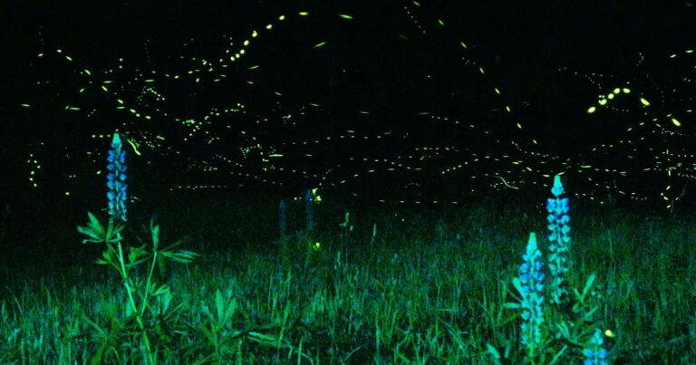 Scientists Made Mice Glow in the Dark to Study Mitochondria - Futurism