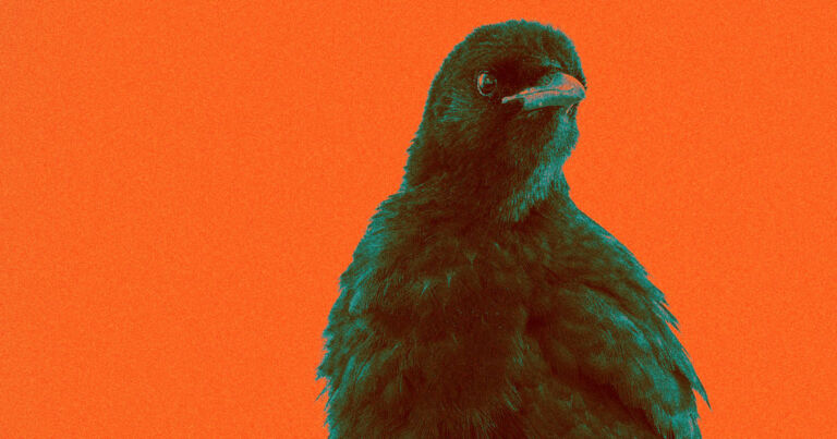 Scientists claim to have proved that crows have conscious experiences