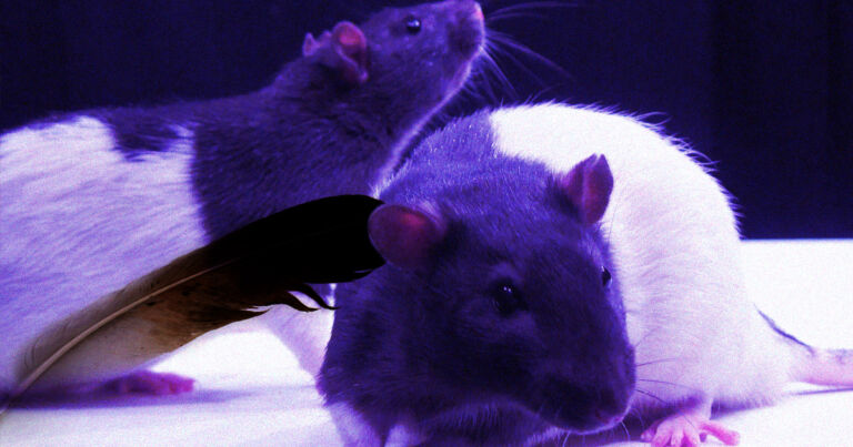 Finally: Scientists Discover Which Rats Like to Be Tickled - Futurism