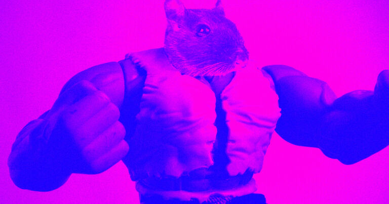 """Gene-hacked """"bodybuilder"""" mice stayed ripped on space station"""