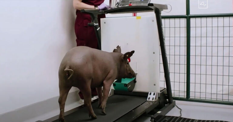 PETA is really upset with Elon Musk for testing Neuralink on pigs