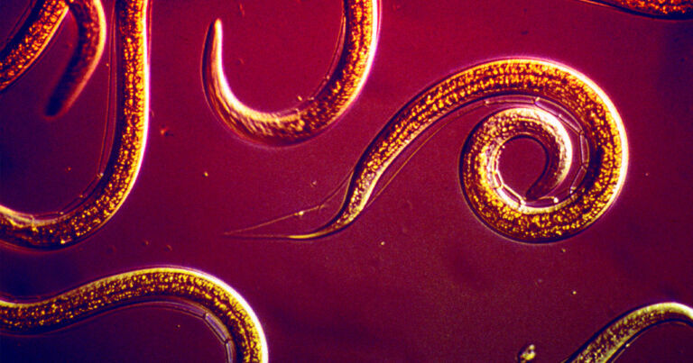 Scientists: Worms Could Kill Pests on Space Vegetables - Futurism