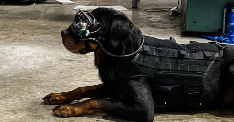 The US military developed AR goggles for dogs