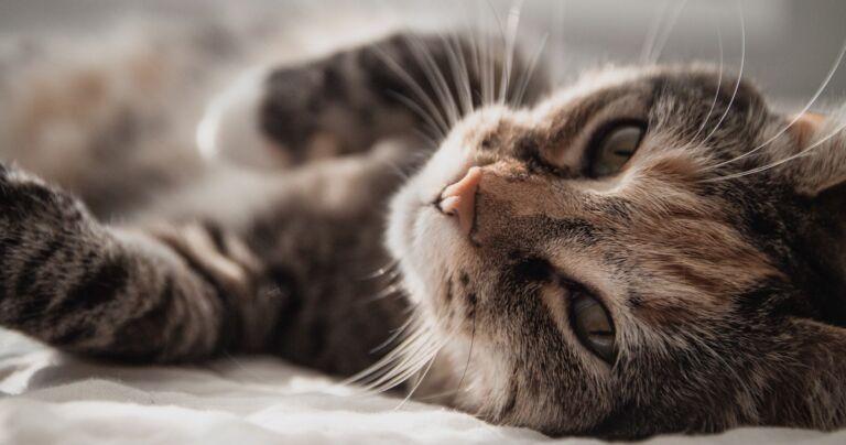This Cutting Edge DNA Test Lets You Better Understand Your Weird-Ass Cat