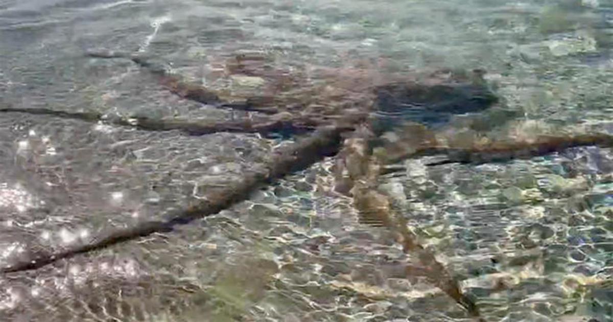 Giant Octopus Attacks Australian Geologist