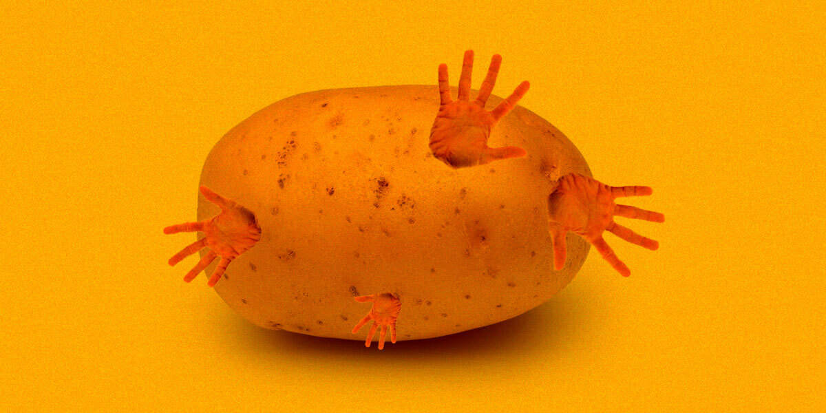 Scientists Add Human Fat Gene Into Potatoes to Make Them Grow Huge