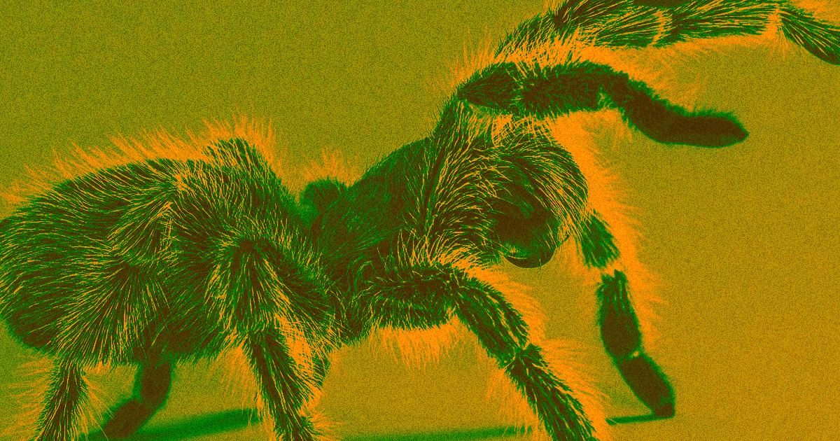 Scientists Use AR to Make Arachnophobes See Huge Spiders